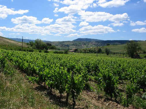 Vers Limoux